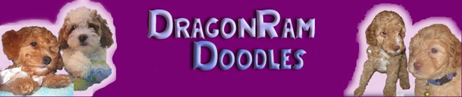 drangonram-doodles