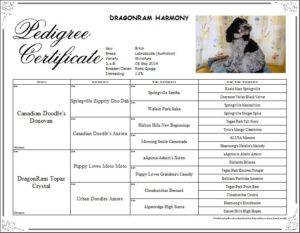Harmony_pedigree