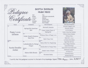 Hugo pedigree
