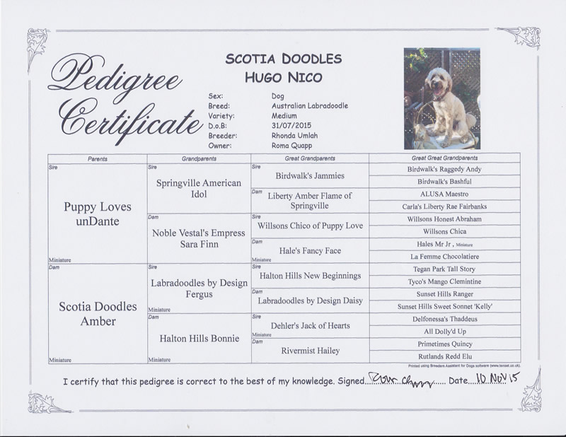 Hugo pedigree