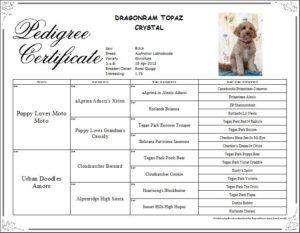 Topaz_pedigree