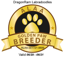 Gold Australian Labradoodle Association 