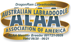 Australian Labradoodle Association 