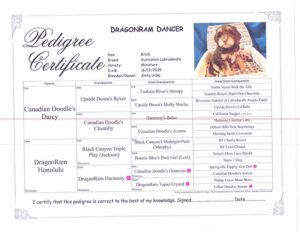 Dancer-pedigree