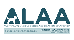 Australian Labradoodle Association  of America Member
